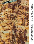 texture of rusty iron  cracked... | Shutterstock . vector #1017627382