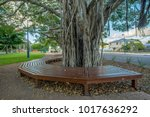 A Morton Bay Fig Tree...