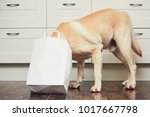naughty dog in home kitchen.... | Shutterstock . vector #1017667798