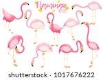 beautiful elegant pink... | Shutterstock .eps vector #1017676222