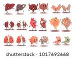 human internal organs healthy... | Shutterstock .eps vector #1017692668
