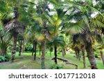 palm grove | Shutterstock . vector #1017712018