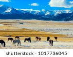horses of south park  colorado | Shutterstock . vector #1017736045