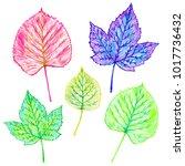 hand painted illustration of... | Shutterstock . vector #1017736432