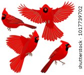 Cardinal Birds Are Sitting And...