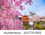 kiyomizu dera temple and cherry ...   Shutterstock . vector #1017747832