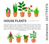 home flowers and plants.... | Shutterstock .eps vector #1017759376