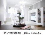 an eternal rose in the glass... | Shutterstock . vector #1017766162
