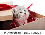 Stock photo little curious grey fluffy kitten looking from decorated cardboard birthday box being cute present 1017768226