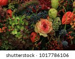 mixed autumn flower arrangement ... | Shutterstock . vector #1017786106