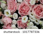 pink and white  flowers in a... | Shutterstock . vector #1017787336