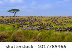 Small photo of Big herd of wildebeest in the savannah. Great Migration. Kenya. Tanzania. Masai Mara National Park. An excellent illustration.