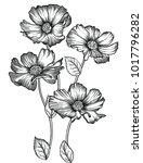 vector illustration of flowers... | Shutterstock .eps vector #1017796282