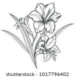 vector illustration of flowers... | Shutterstock .eps vector #1017796402