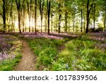 bluebell woods with birds... | Shutterstock . vector #1017839506