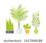 indoor floor plants with lush... | Shutterstock .eps vector #1017848188