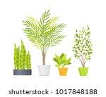 indoor floor plants with lush... | Shutterstock .eps vector #1017848188