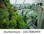 singapore   december 9  flower... | Shutterstock . vector #1017880495