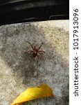 Small photo of A brown spider and a yellow autumn leaf against a speckled background.( lat. Araneae)