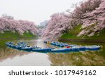 beautiful cherry blossoms and... | Shutterstock . vector #1017949162