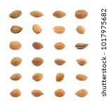 single almond nut isolated over ... | Shutterstock . vector #1017975682