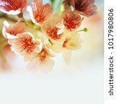 spring flowers. sakura | Shutterstock . vector #1017980806