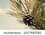 conifer tree detail | Shutterstock . vector #1017985282