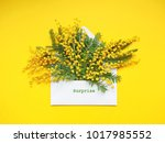 brunches of beautiful mimosa... | Shutterstock . vector #1017985552