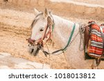 close up of saddled white horse ... | Shutterstock . vector #1018013812