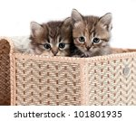 Stock photo kittens in a gift box it is isolated on a white background 101801935