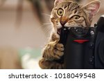 Stock photo funny cat with a camera 1018049548