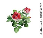pattern  roses  on a colored...   Shutterstock . vector #1018052782