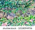 wall creeper on stone masonry... | Shutterstock . vector #1018094956