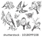 Stock vector bird hand drawn set in vintage style with flowers spring birds sitting on blossom branches linear 1018099108