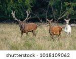 deer forest  deer forest deer | Shutterstock . vector #1018109062