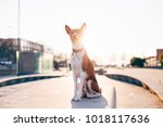 cute and adorable dog pet sits... | Shutterstock . vector #1018117636