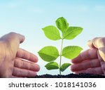 planting and watering seedlings ... | Shutterstock . vector #1018141036