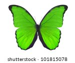 Stock photo macro photo of green butterfly isolated on white background 101815078