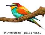 exotic bird on a branch... | Shutterstock . vector #1018175662