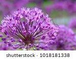 Violet Flowers On A Fancy...