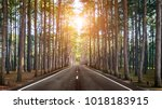a long straight road in forest. | Shutterstock . vector #1018183915