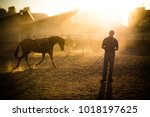 late afternoon horse work in... | Shutterstock . vector #1018197625