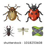 insect  bug  beetle  paw ...   Shutterstock .eps vector #1018253608