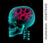 skull x ray with heart symbol ... | Shutterstock .eps vector #1018270102