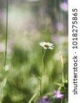 landscape is summer. green... | Shutterstock . vector #1018275865