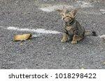 cute kitten stand on floor at... | Shutterstock . vector #1018298422