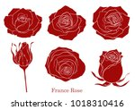 rose vector set by hand drawing.... | Shutterstock .eps vector #1018310416