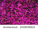 orchid flowers background. | Shutterstock . vector #1018330816