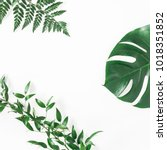 green tropical leaves on white... | Shutterstock . vector #1018351852