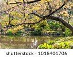 tree over pond    Shutterstock . vector #1018401706